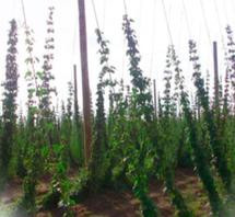 Horticulture/Mix Media